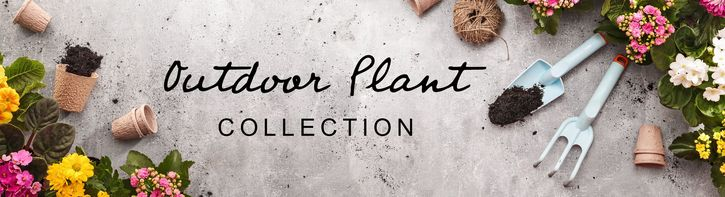Outdoor Plants & Gifts